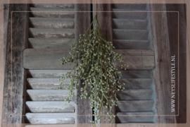 Bosje skimmia groen | M