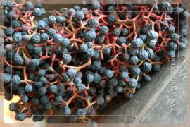 Krans sierfruit bes blauw | 30 cm
