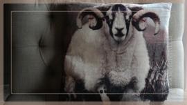 Kussen fluweel 45 x 45 cm | ram