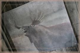 Muse wanddoek rendier