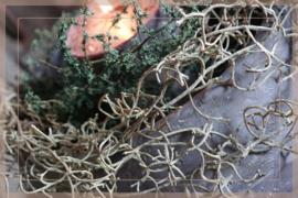 Tillandsia guirlande  | 70 cm