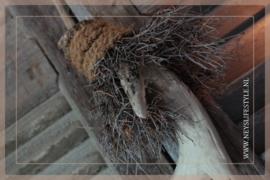 Gewei hanger bonsai |