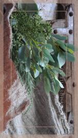 Eucalyptus toef | 26 cm
