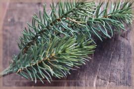 Pine takje   22 cm