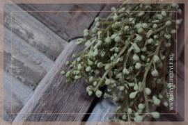 Bosje skimmia groen | S