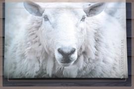 Tuinposter | schaap