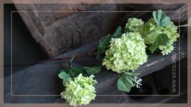 Hortensia/ Viburnum tak | groen 85 cm