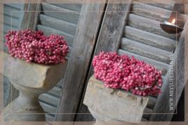 Pepperberry krans 10-15 cm