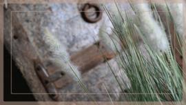 Setaria grass | S