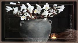 Magnolia tak | wit 40 cm