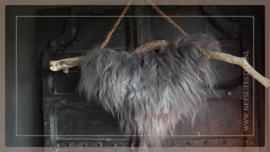 Hanger schapenwol aan stok   2