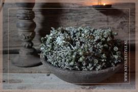 Wax krans Autumn olive 23 cm