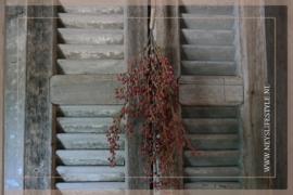 Bosje skimmia rood | M
