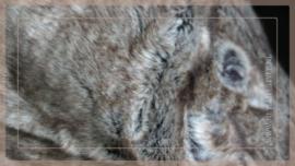 Luxe bont plaid 170 x 130 cm bruin/beige