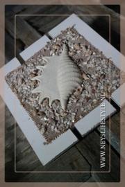 Wand decoratie | Lambis schelp