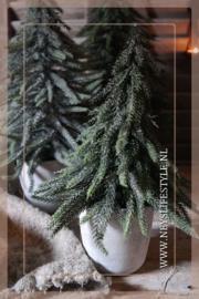 Kerstboom in pot Julias | M