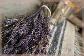 Lavendel bosje