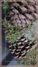 Krans Dennenappel hair moss | 25 cm