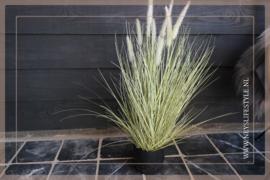 Grass Bush in Pot | 90 cm