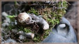 Krans Spring mos | 35 cm