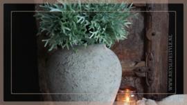 Plant kunst Platycerium/hersthoorn