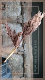 Astilbe tak | bruin 81 cm