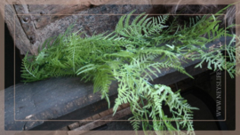 Pteropsida groen | 110 cm