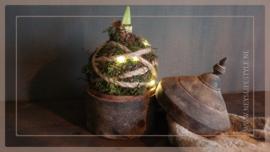 Amaryllisbol met mos, touw & LED lampjes