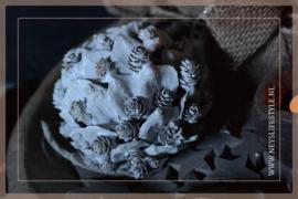 Bal snow pine   13 cm
