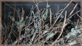Krans Larix moss wild   40 cm