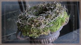 Bonsai mos krans   30 cm