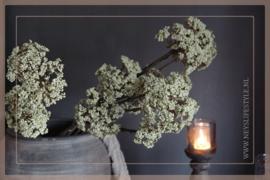 Anethum tak | groen/créme
