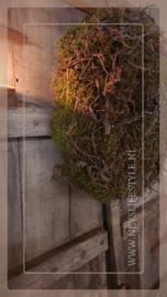 Bonsai mos krans | 45 cm