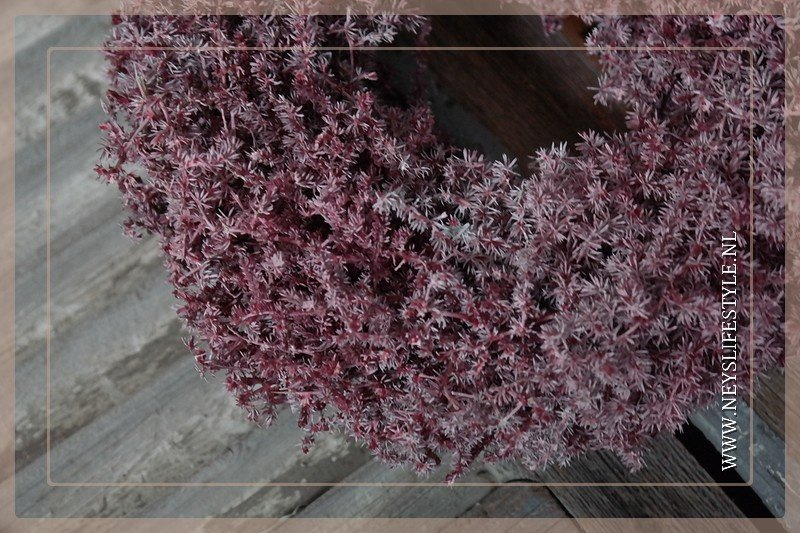 Wild Asparagus krans 23 cm | bordeaux waxed