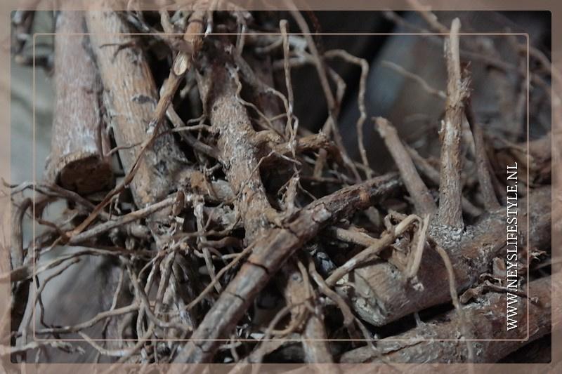 Hart hanger root