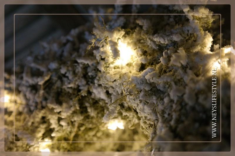 Asparagus krans snow | 23 cm