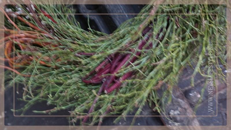 Krans berk Salix | 30 cm