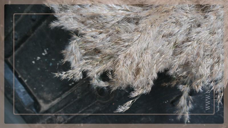 Krans Rietpluim 35 cm | naturel