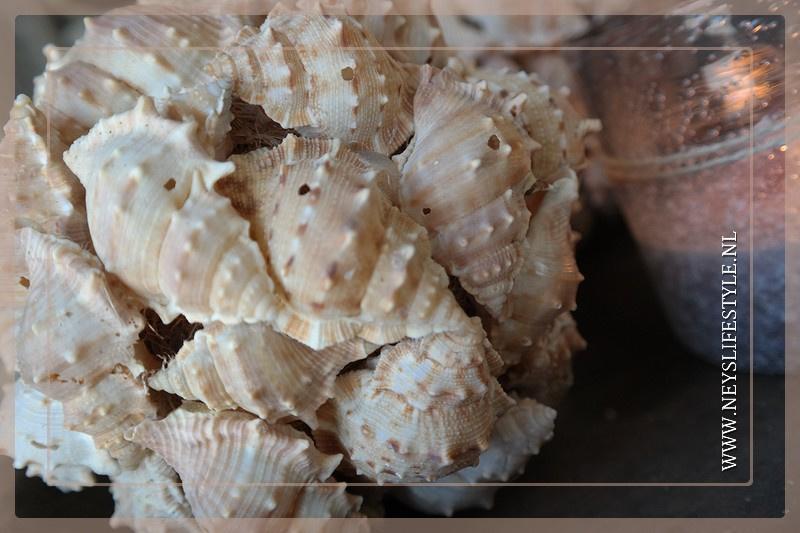 Bal schelp chimmom 15 cm