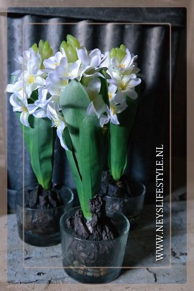 Hyacinth bol n glas | wit