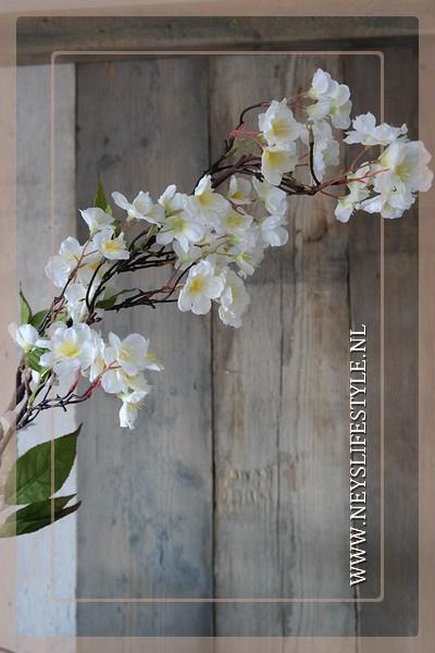 Prunus tak wit | 100 cm