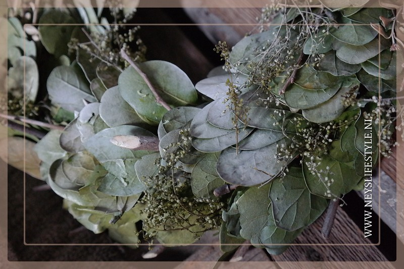 Eucalyptus krans dried | 25-30 cm
