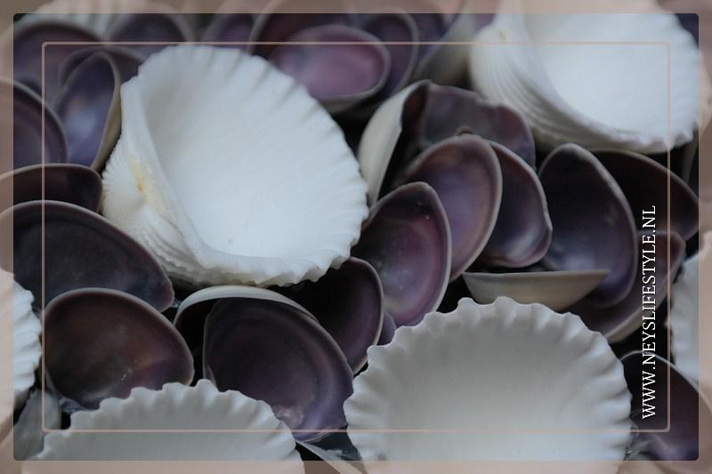 Krans Schelpen | Violet | 40 cm
