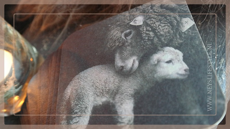 Onderzetters vilt | Lammetje