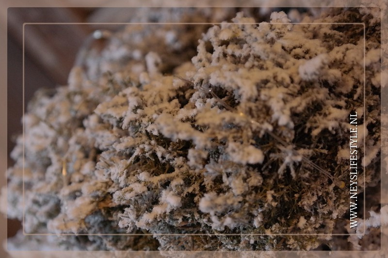 Asparagus krans snow | 35 cm
