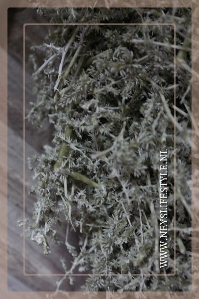Wax krans Asparagus green 70 cm