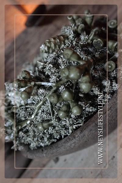Wax krans Autumn olive 35 cm