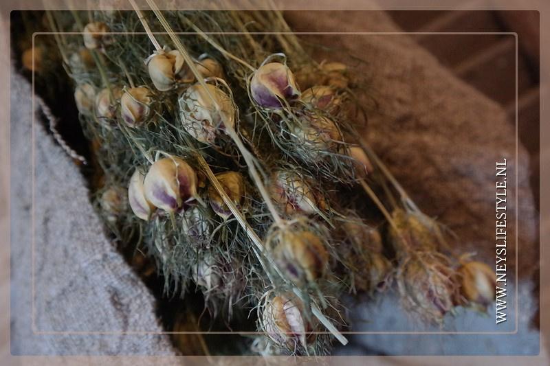 Bosje Nigella flowers | gedroogd