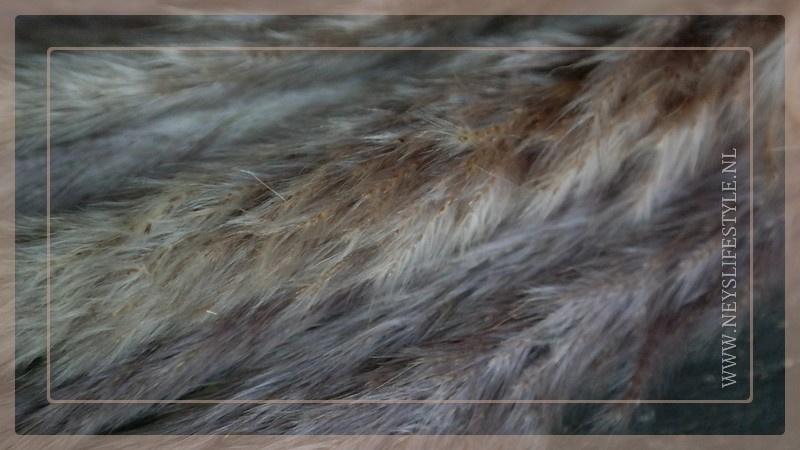 Bos droogbloemen   Pampas fluffy