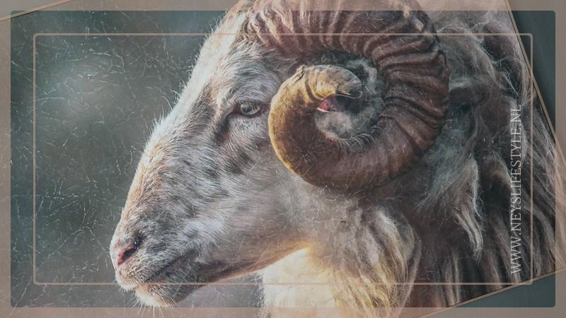 Ram op doek | Wanddecoratie
